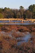 Double Trouble Cranberry bog New Jersey