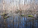 Great Swamp National Wildlife Refuge 2 NJ