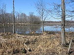 Great Swamp New Jersey