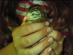 Holding a guinea hen