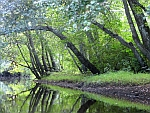 NJ Pine Barrens Batsto River