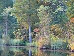 Pine Barrens Lake Atsion