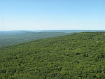 Sams View Pine Barrens