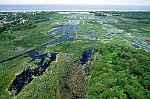 Cape May Wetlands New Jersey